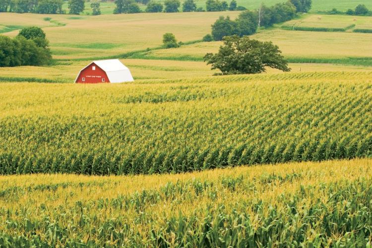 Assumption, Illinois. Photo courtesy Illinois Farm Bureau, Ken Kashian